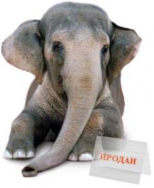 slon-prodan